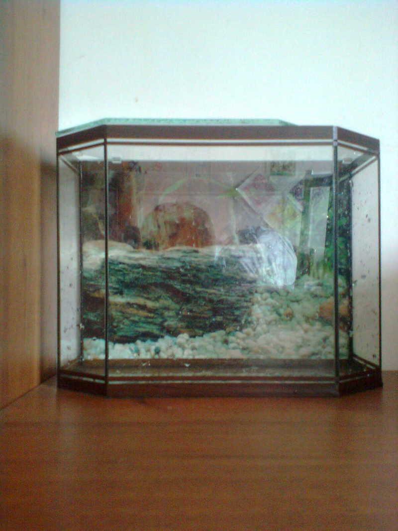 Купить аквариум цена фото 2