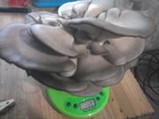 мицелий грибы грибные блоки
