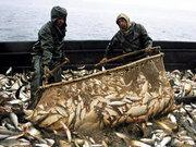 Куплю рыбу,  охлажденного бычка. Тел.095-226-68-23.