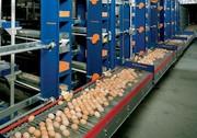 Продам яйцо куриное,  по цене производителя