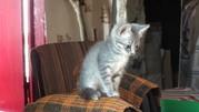 Котята даром воспитанные красивые ухоженные ласковые Крым
